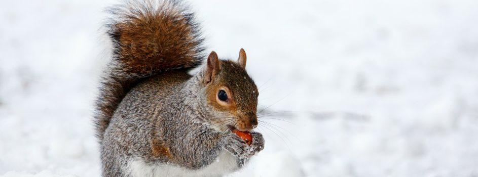 Fatboysrun Episode 148 – Langsam ernährt sich das dicke Eichhörnchen